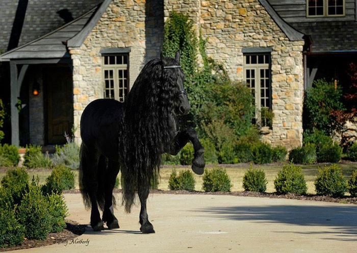 Conheça Frederick, o cavalo mais bonito do mundo (30 fotos) 8