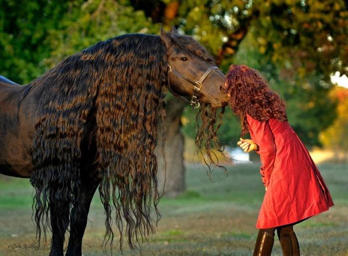 Conheça Frederick, o cavalo mais bonito do mundo (30 fotos) 9