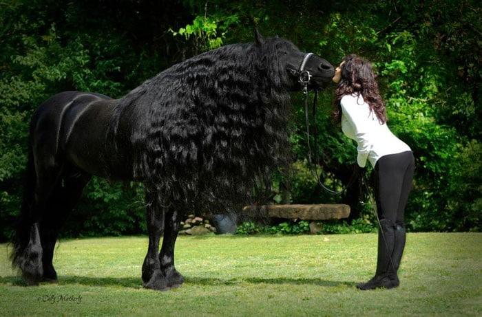 Conheça Frederick, o cavalo mais bonito do mundo (30 fotos) 11