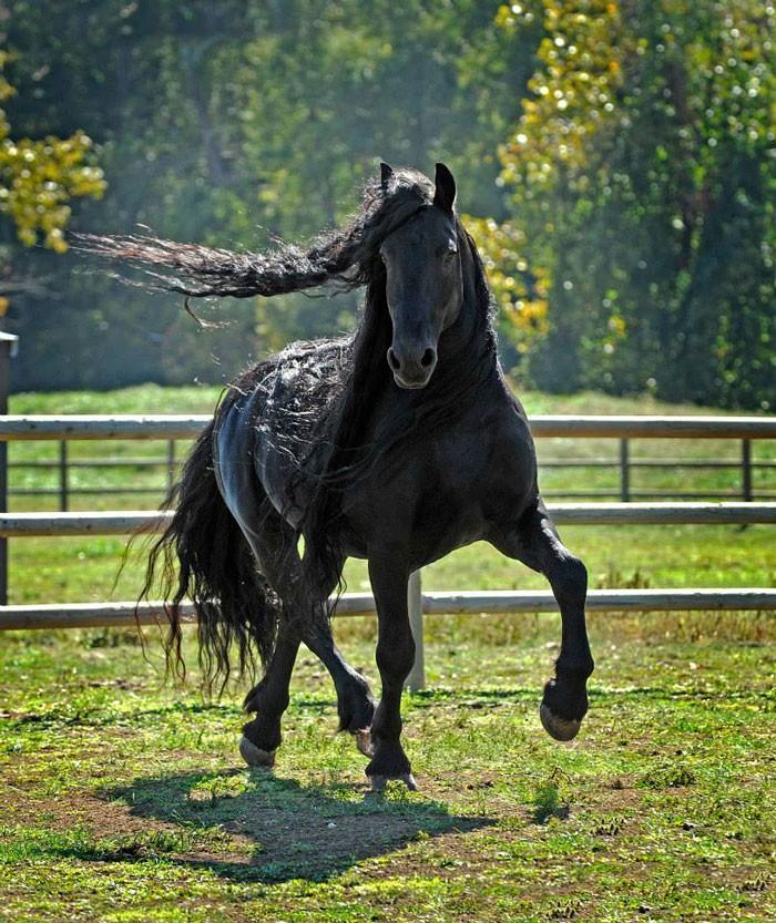 Conheça Frederick, o cavalo mais bonito do mundo (30 fotos) 12