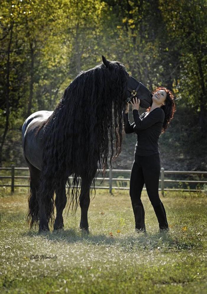 Conheça Frederick, o cavalo mais bonito do mundo (30 fotos) 15