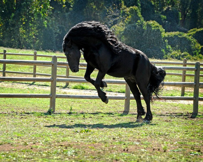 Conheça Frederick, o cavalo mais bonito do mundo (30 fotos) 16
