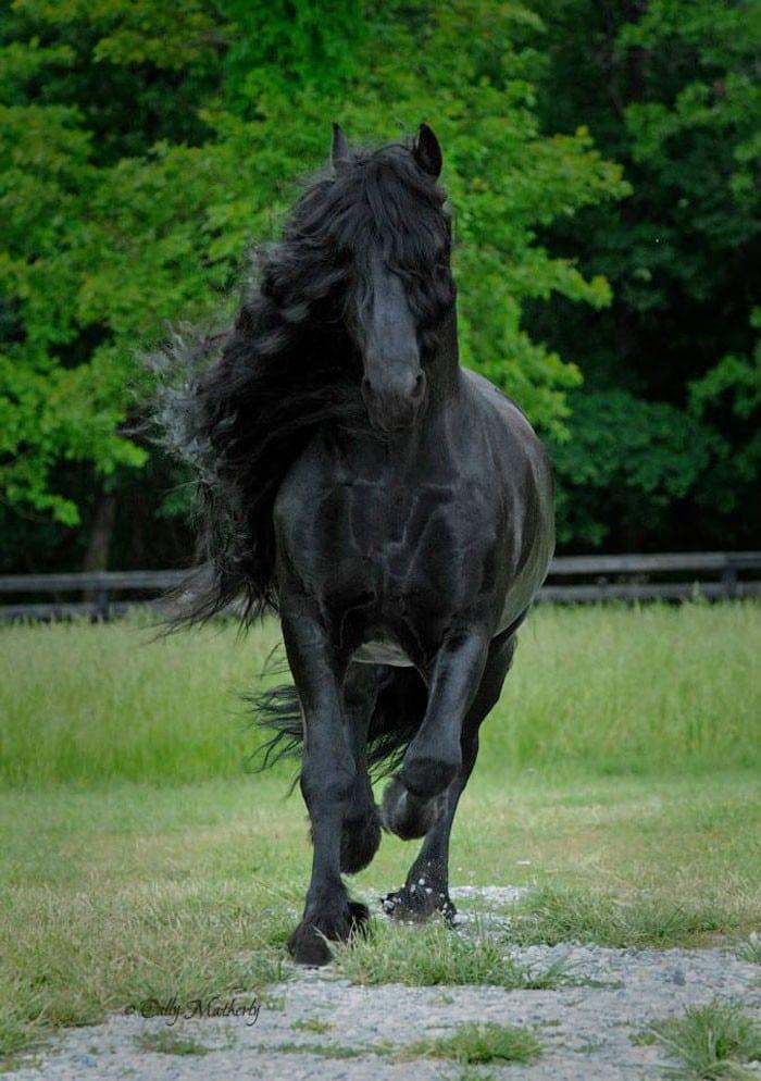 Conheça Frederick, o cavalo mais bonito do mundo (30 fotos) 19