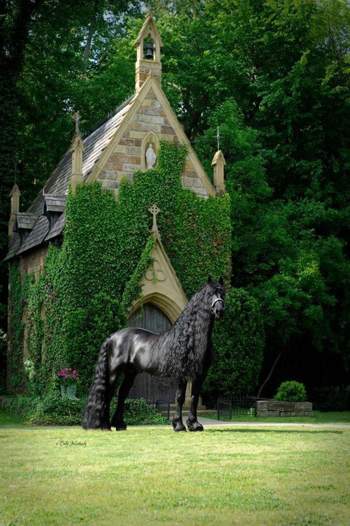Conheça Frederick, o cavalo mais bonito do mundo (30 fotos) 21