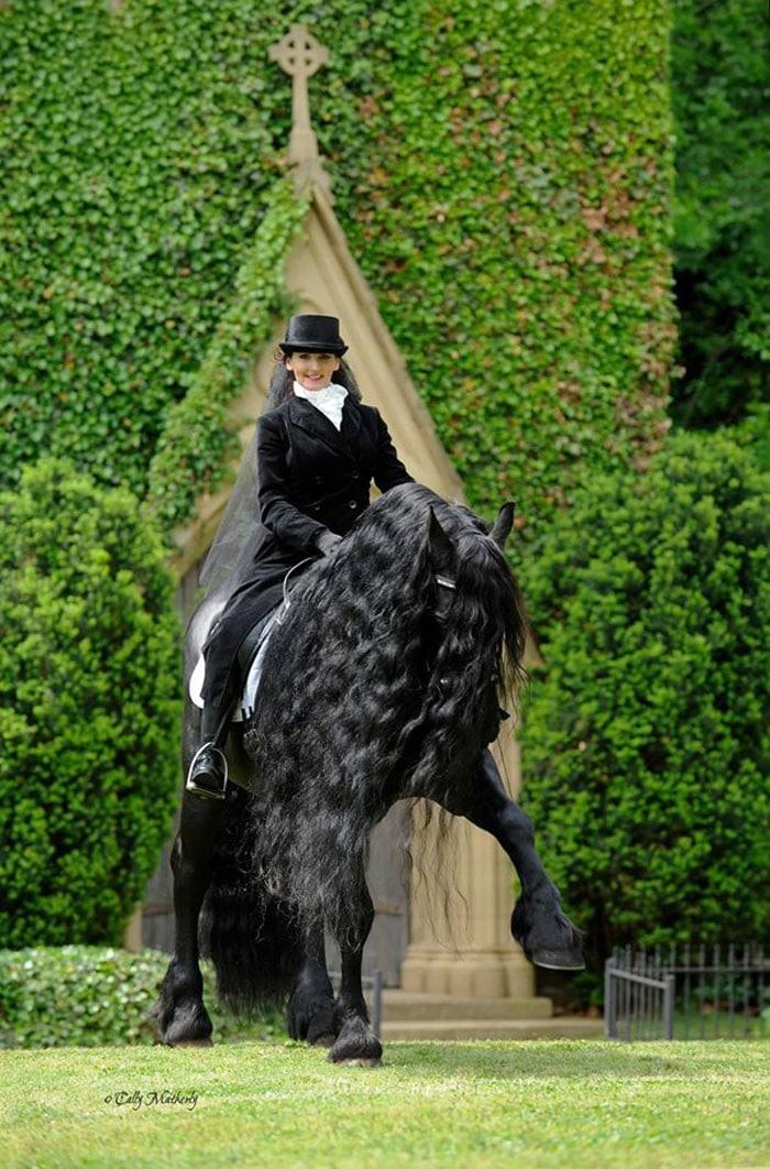Conheça Frederick, o cavalo mais bonito do mundo (30 fotos) 23
