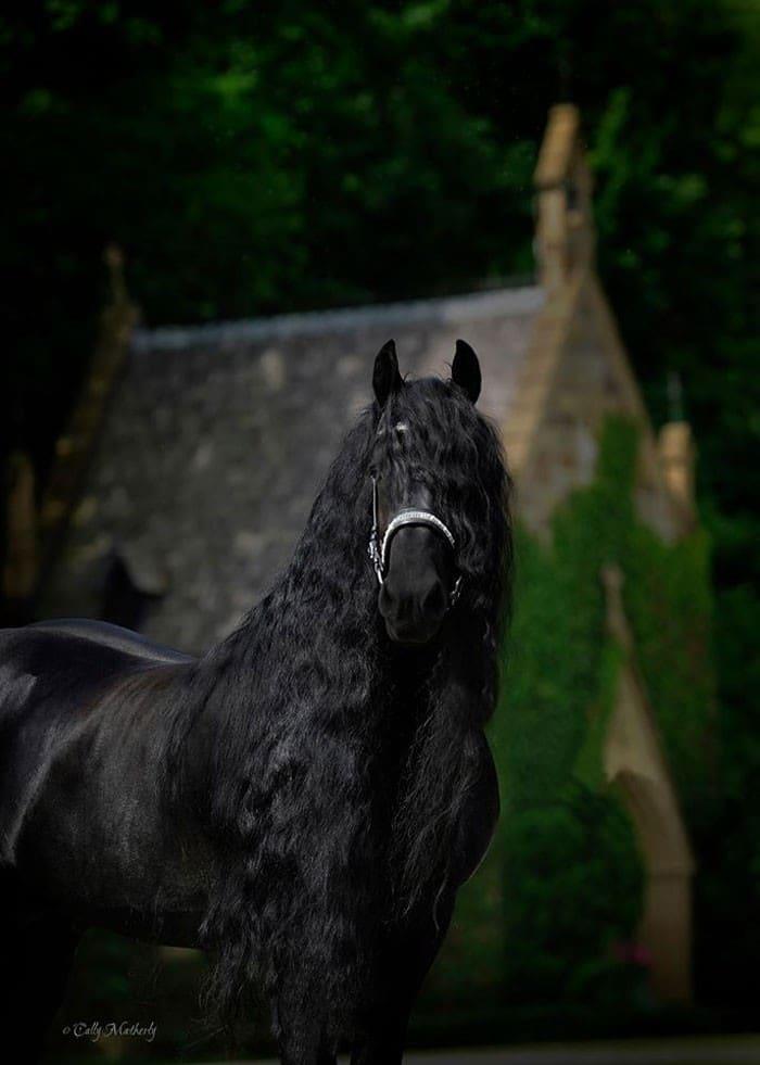 Conheça Frederick, o cavalo mais bonito do mundo (30 fotos) 25