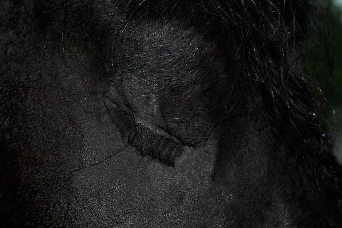 Conheça Frederick, o cavalo mais bonito do mundo (30 fotos) 26