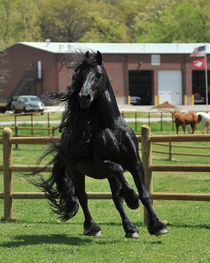 Conheça Frederick, o cavalo mais bonito do mundo (30 fotos) 27