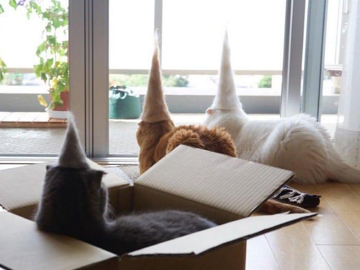 21 gatos usando chapéus feitos com seus próprios pelos 2