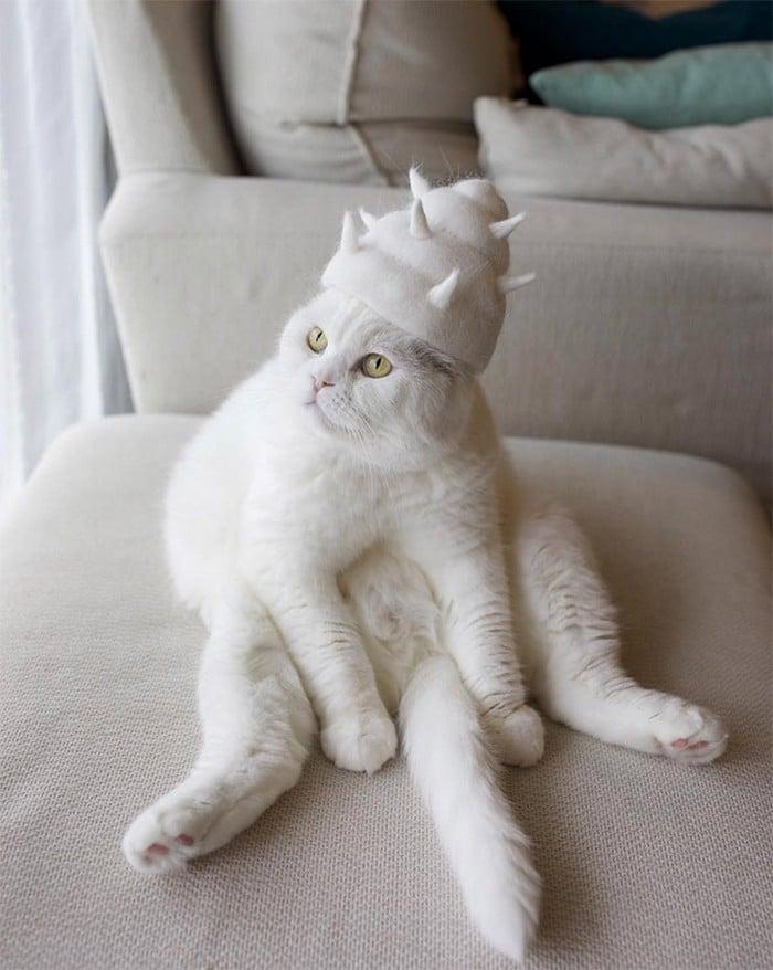 21 gatos usando chapéus feitos com seus próprios pelos 3