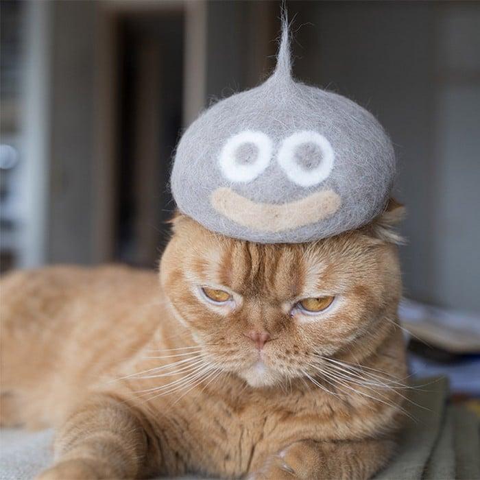 21 gatos usando chapéus feitos com seus próprios pelos 4