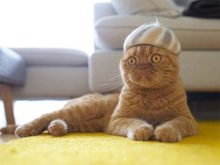 21 gatos usando chapéus feitos com seus próprios pelos 7