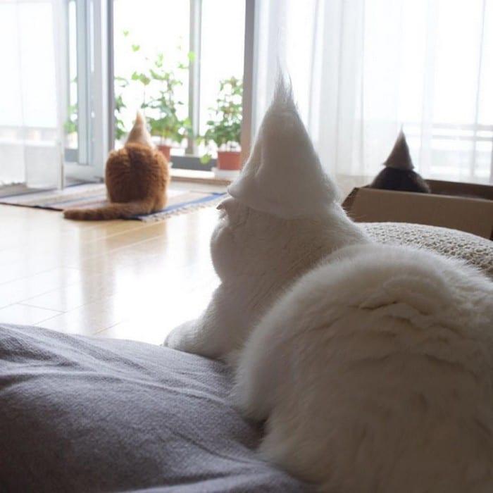 21 gatos usando chapéus feitos com seus próprios pelos 8