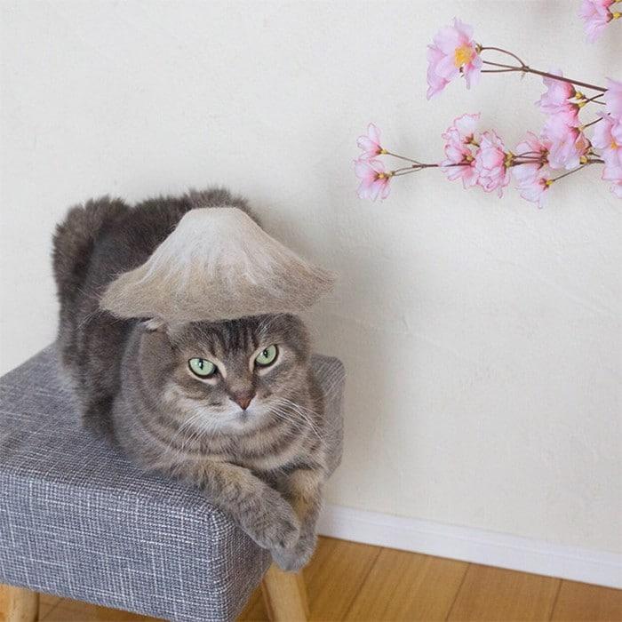 21 gatos usando chapéus feitos com seus próprios pelos 10