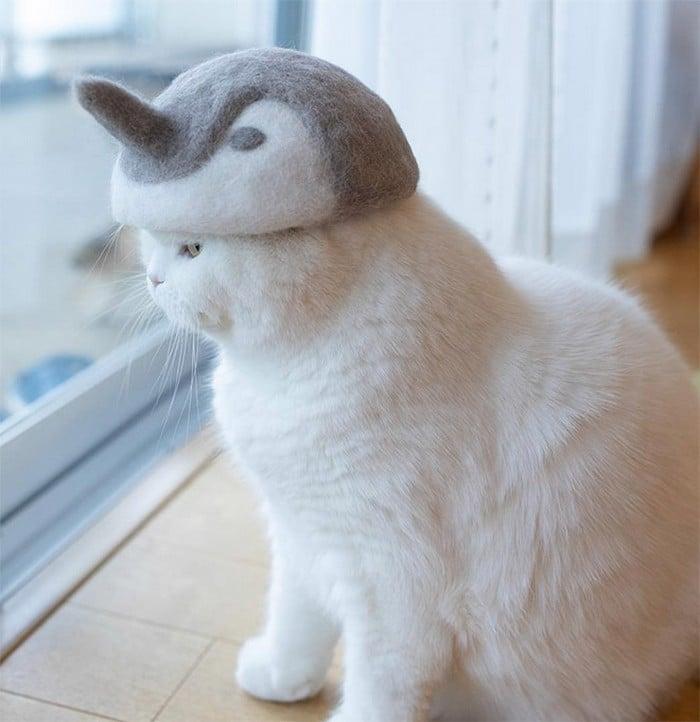 21 gatos usando chapéus feitos com seus próprios pelos 11