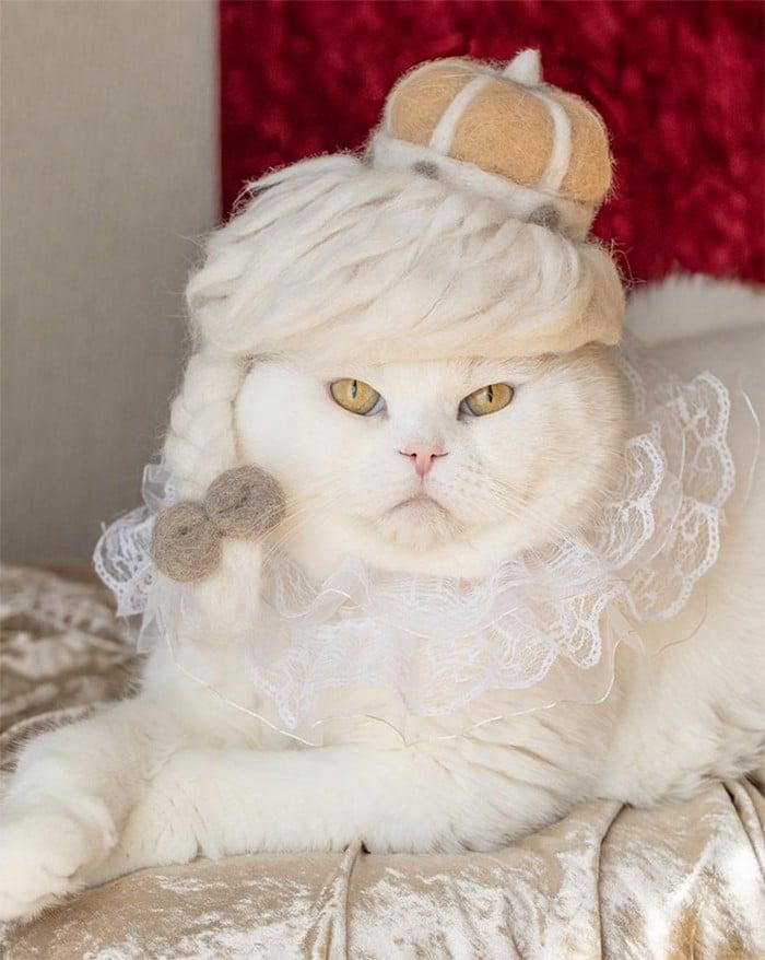 21 gatos usando chapéus feitos com seus próprios pelos 12