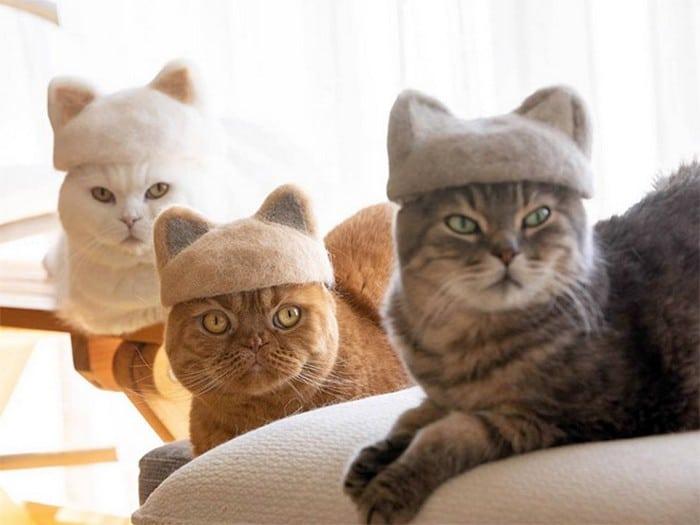 21 gatos usando chapéus feitos com seus próprios pelos 15