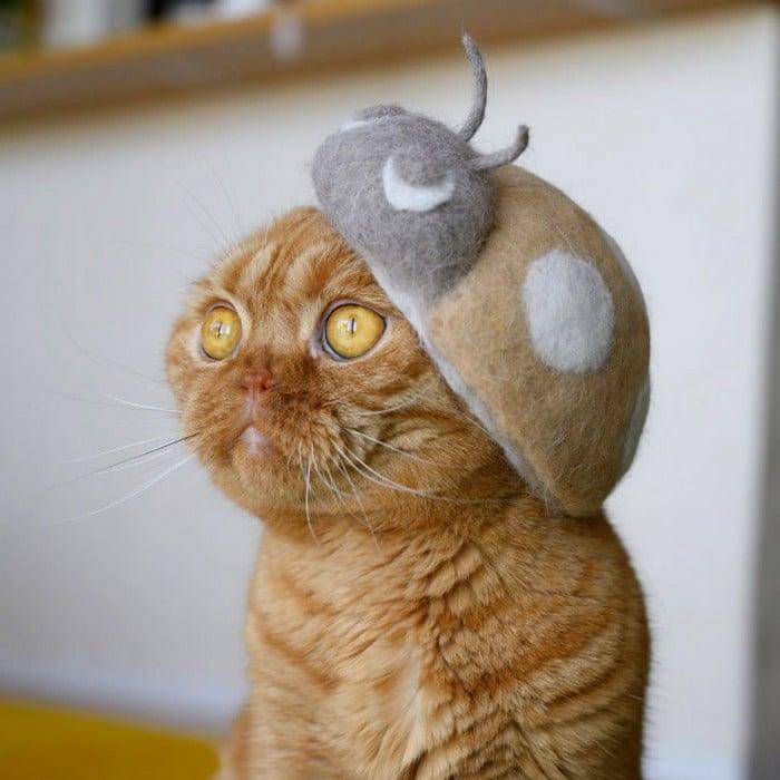21 gatos usando chapéus feitos com seus próprios pelos 16