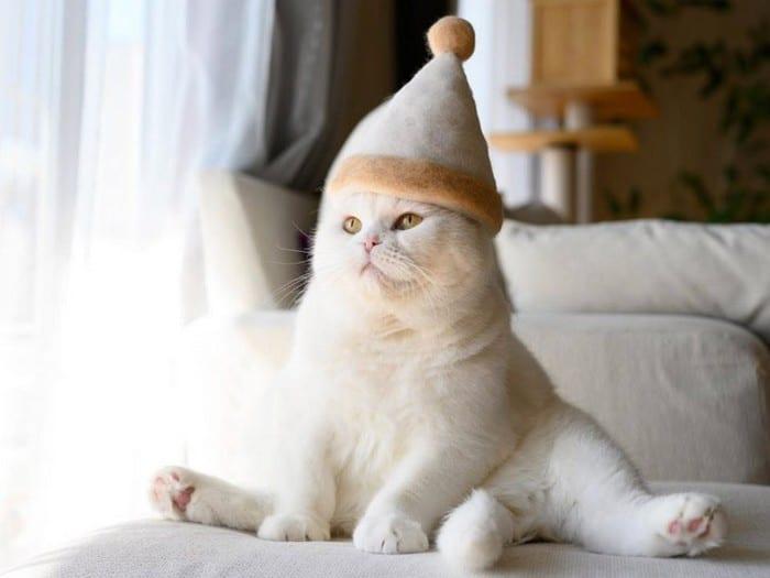 21 gatos usando chapéus feitos com seus próprios pelos 17