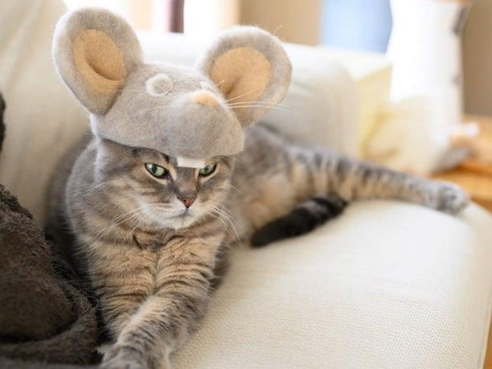 21 gatos usando chapéus feitos com seus próprios pelos 18