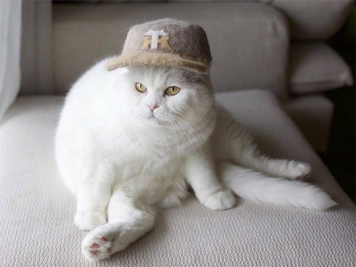 21 gatos usando chapéus feitos com seus próprios pelos 19