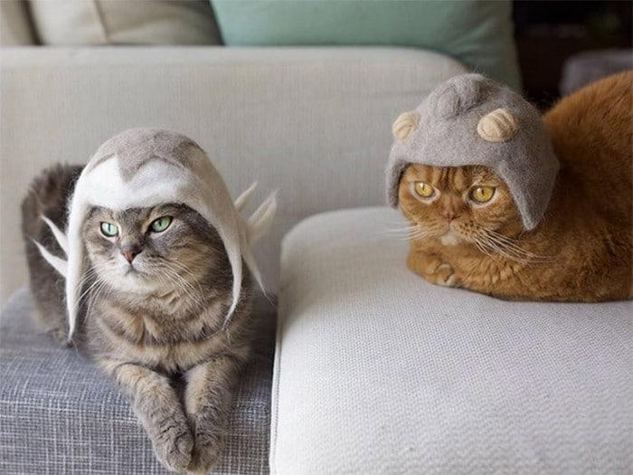 21 gatos usando chapéus feitos com seus próprios pelos 20