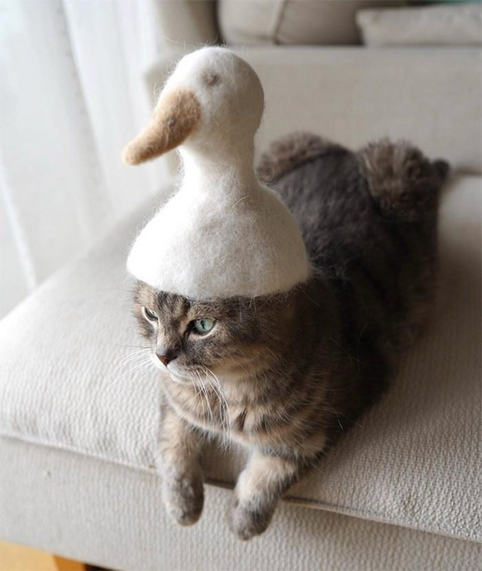 21 gatos usando chapéus feitos com seus próprios pelos 21