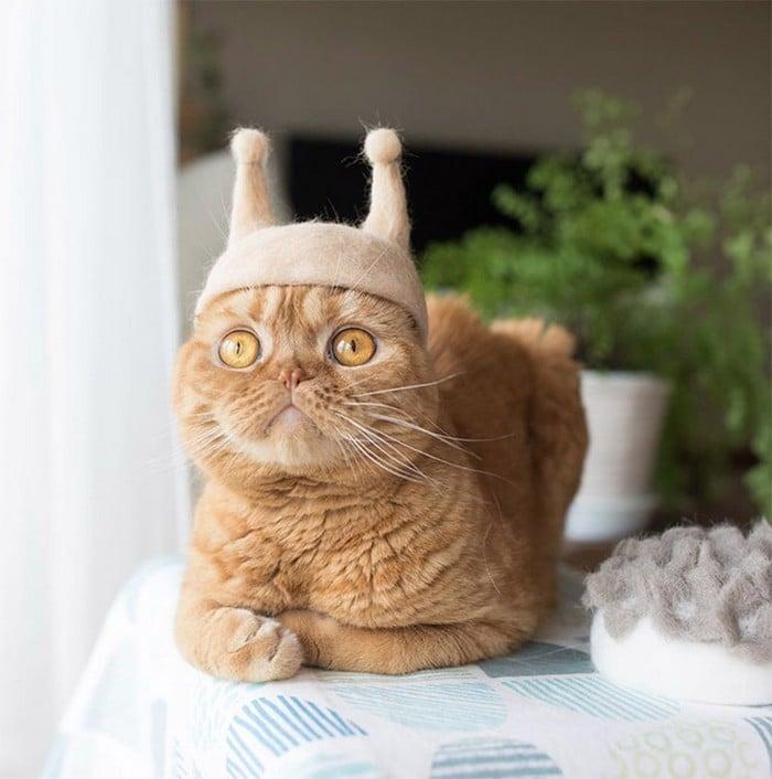 21 gatos usando chapéus feitos com seus próprios pelos 22