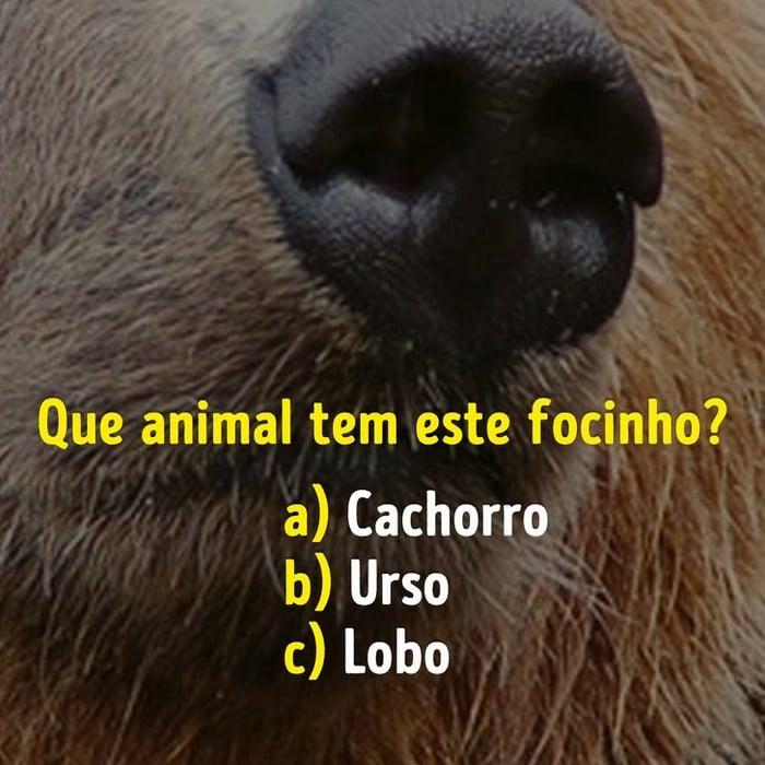 Você conhece bem os focinhos dos animais? 2