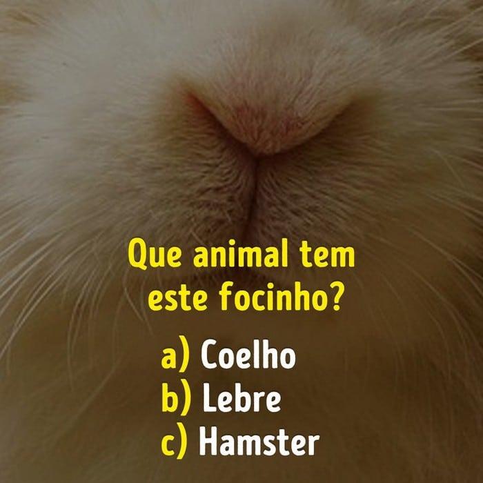 Você conhece bem os focinhos dos animais? 3