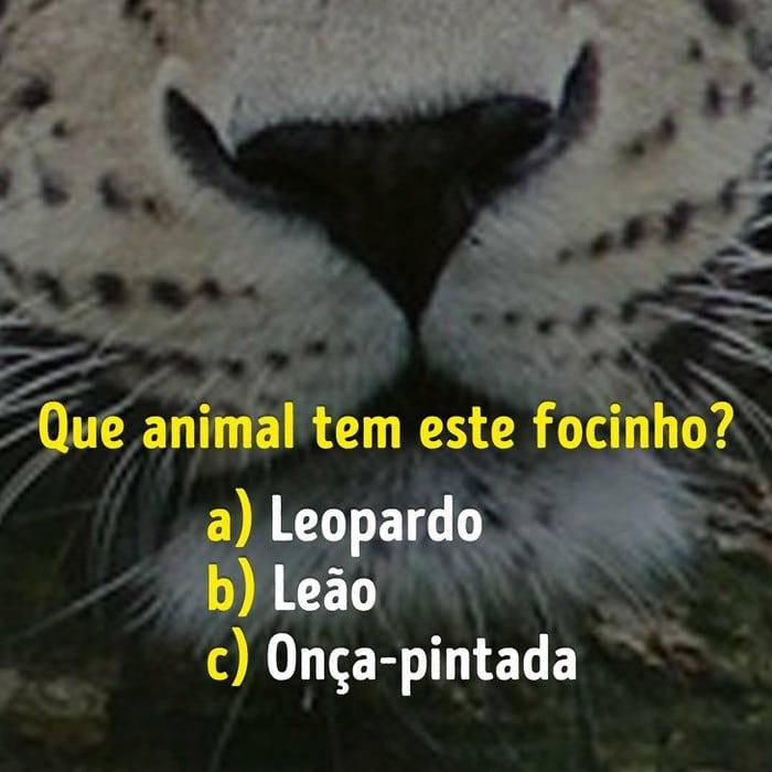 Você conhece bem os focinhos dos animais? 4