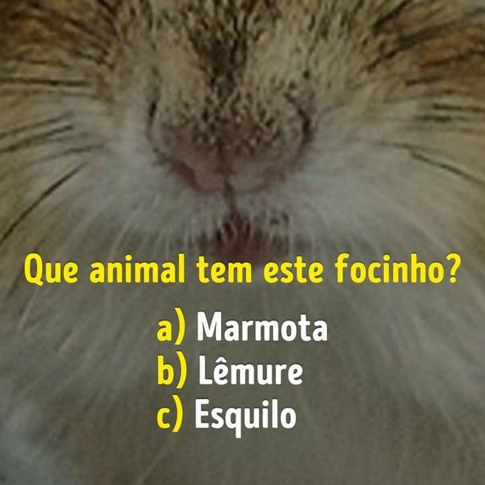 Você conhece bem os focinhos dos animais? 5