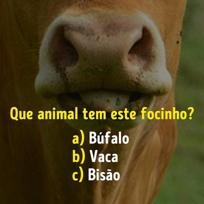 Você conhece bem os focinhos dos animais? 6