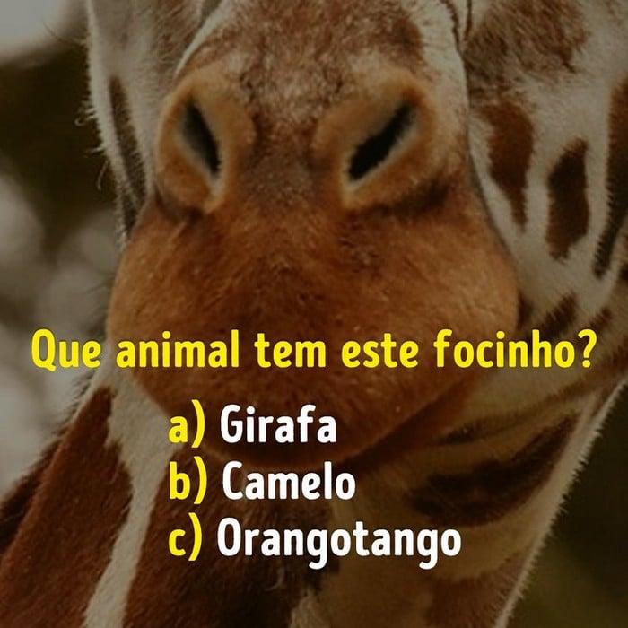 Você conhece bem os focinhos dos animais? 8