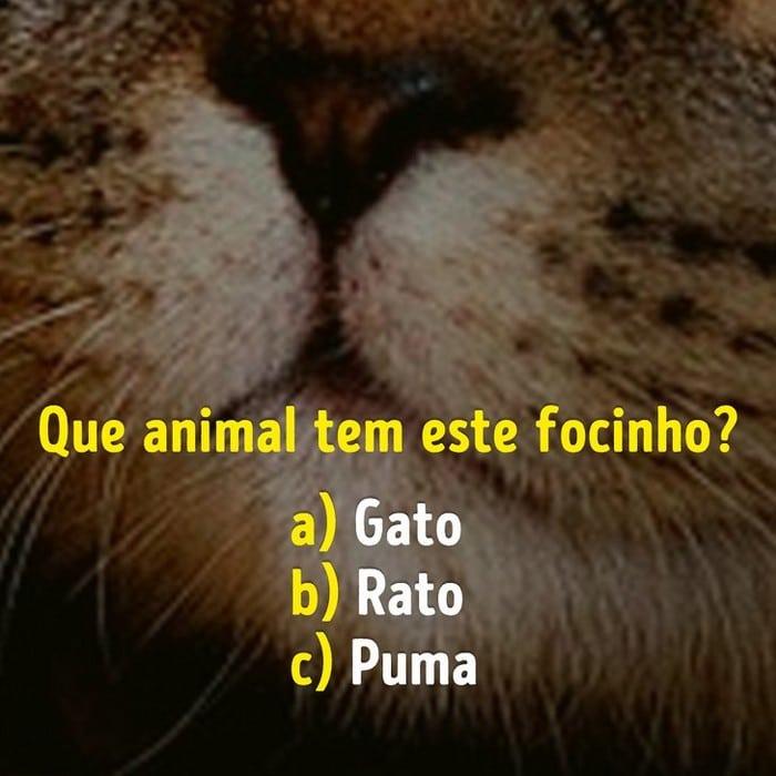 Você conhece bem os focinhos dos animais? 9