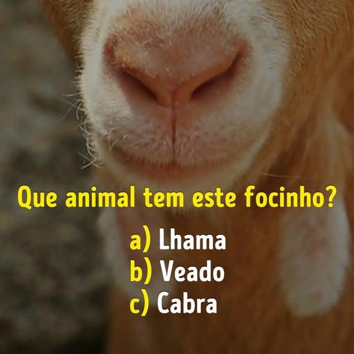Você conhece bem os focinhos dos animais? 11