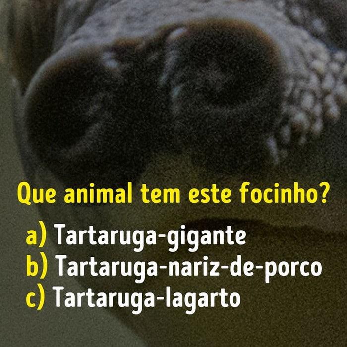 Você conhece bem os focinhos dos animais? 12