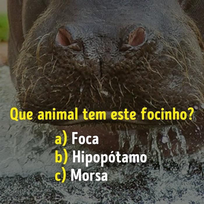 Você conhece bem os focinhos dos animais? 13