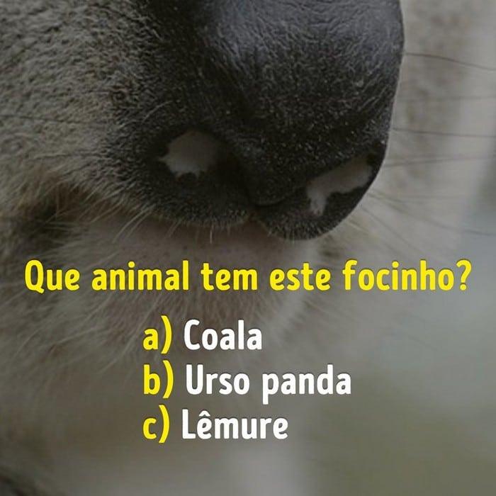 Você conhece bem os focinhos dos animais? 14