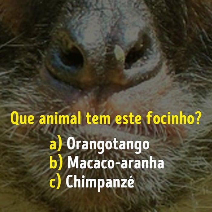 Você conhece bem os focinhos dos animais? 15