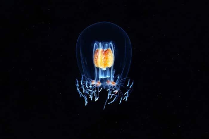 A beleza alienígena das criaturas subaquáticas em fotos de Alexander Semenov (40 fotos) 3