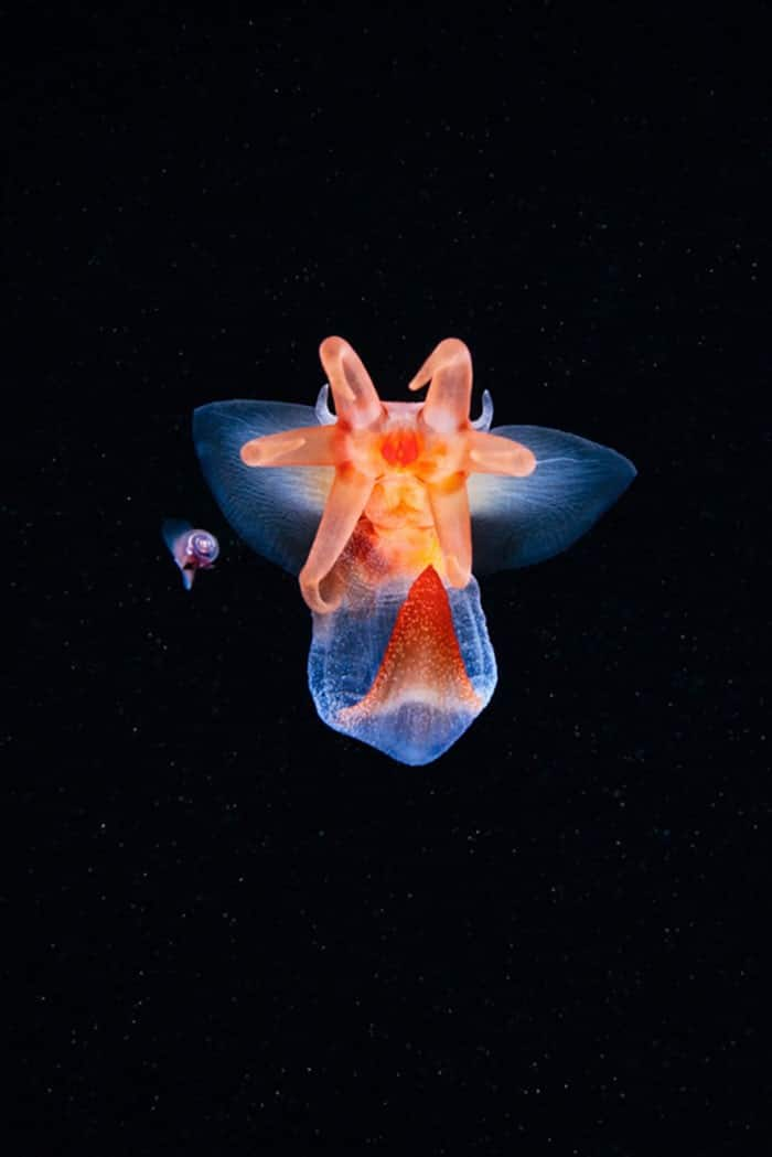 A beleza alienígena das criaturas subaquáticas em fotos de Alexander Semenov (40 fotos) 7