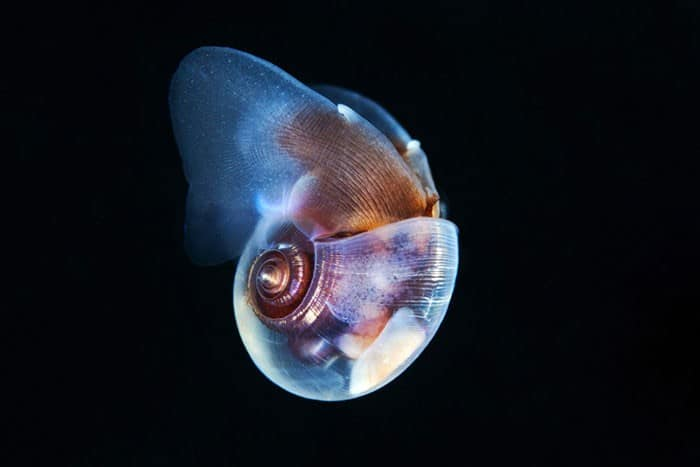 A beleza alienígena das criaturas subaquáticas em fotos de Alexander Semenov (40 fotos) 10