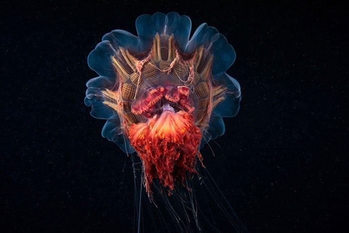 A beleza alienígena das criaturas subaquáticas em fotos de Alexander Semenov (40 fotos) 13