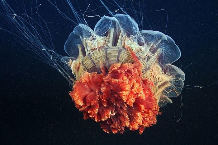 A beleza alienígena das criaturas subaquáticas em fotos de Alexander Semenov (40 fotos) 15