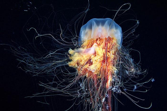 A beleza alienígena das criaturas subaquáticas em fotos de Alexander Semenov (40 fotos) 26