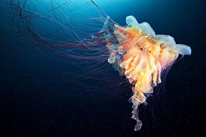 A beleza alienígena das criaturas subaquáticas em fotos de Alexander Semenov (40 fotos) 31