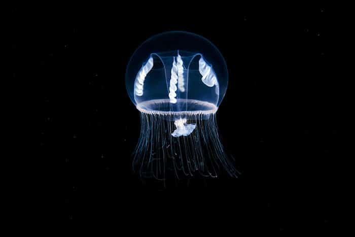 A beleza alienígena das criaturas subaquáticas em fotos de Alexander Semenov (40 fotos) 34