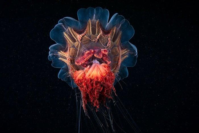 A beleza alienígena das criaturas subaquáticas em fotos de Alexander Semenov (40 fotos) 38