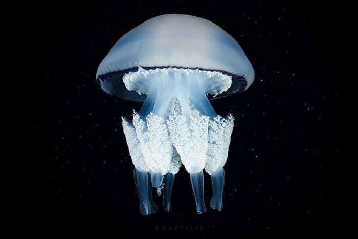 A beleza alienígena das criaturas subaquáticas em fotos de Alexander Semenov (40 fotos) 39